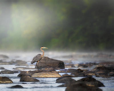 Photograph - Misty River Morning by Bill Wakeley