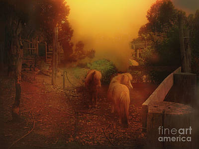 Photograph - Misty Sundown by Elaine Teague