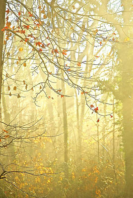 Photograph - Misty Sunlight by Gwendolyn Christopher