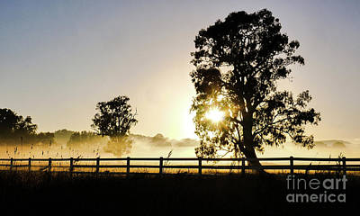 Photograph - Misty Sunrise In Tumut by Lexa Harpell