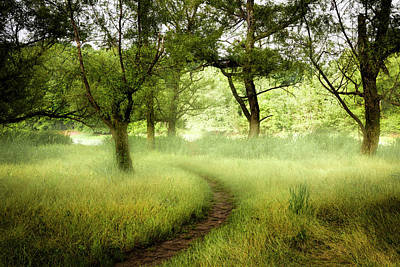 Photograph - Misty Trail by Debra and Dave Vanderlaan