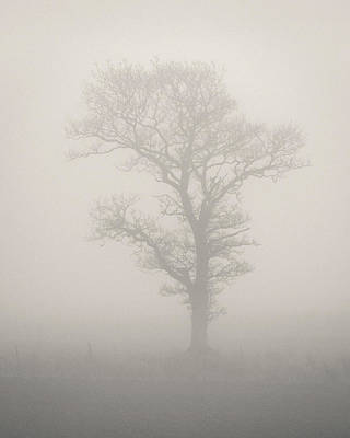 Photograph - Misty Tree by Dave Bowman