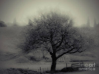Photograph - Misty Tree by Karen Lewis