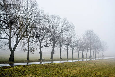 Photograph - Misty Trees by Tana Reiff