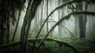 Photograph - Misty Vine Maples by Adam Gibbs