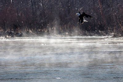 Photograph - Misty Water Eagle by Randy Scherkenbach