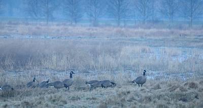Photograph - Misty Wetlands by I'ina Van Lawick