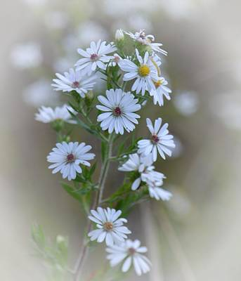 Photograph - Misty Wildflowers by Maria Urso