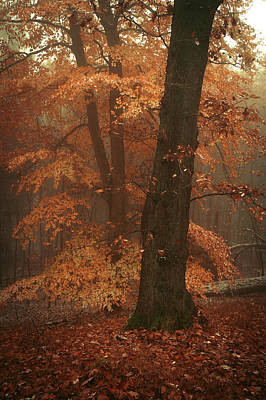 Photograph - Misty Woods by Jenny Rainbow