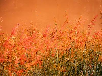 Misty Yellow Hue- Pink Blooms Art Print