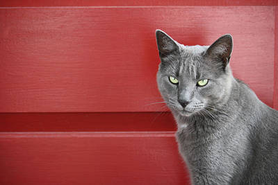 Photograph - Mittens And The Red Door by Mary-Lee Sanders