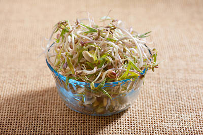 Burgeon Photograph - Mix Of Fresh Plant Sprouts Growing In Glass Bowl  by Arletta Cwalina