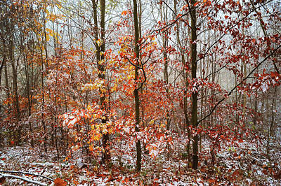 Photograph - Mix Of Seasons With Vibrant Touch by Jenny Rainbow