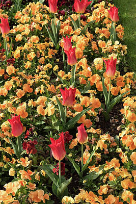 Bight Colors Photograph - Mixed Floral Arrangement by Jon Berghoff