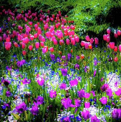 Photograph - Mixed Flowers And Tulips by D Davila