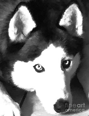 Mixed Media - Mixed Media Expressive Siberian Husky A40417 by Mas Art Studio