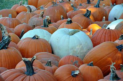 Photograph - Mixed Pumpkins by Teresa Blanton