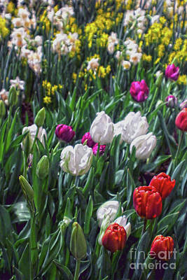 Photograph - Mixed Spring Flowers by Sandy Moulder