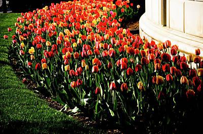 Photograph - Mixed Tulips by Scott Sawyer