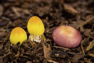 Photograph - Mixing Of Species Of Fungi by Douglas Barnett
