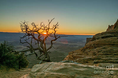 Photograph - Moab Tree by Kristal Kraft