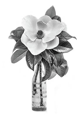 Photograph - Mobile Magnolia Black And White by JC Findley