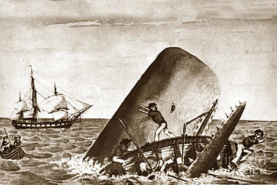 Photograph - Moby Dick Both Jaws, Like Enormous Shears Bit The Craft Complete In Half by California Views Archives Mr Pat Hathaway Archives