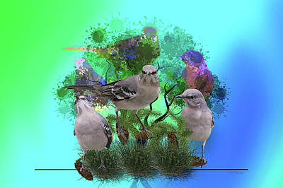 Photograph - Mocking The Mockingbirds by Ericamaxine Price