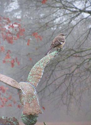 Photograph - Mockingbird And Eagle by Kathy Clark