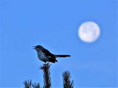 Photograph - Mockingbird And Supermoon by Deborah Moen