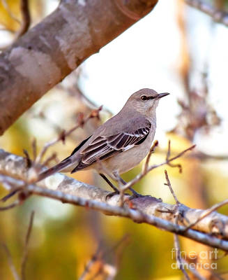 Bird Photograph - Mockingbird At Sunset by Andrew Glisson