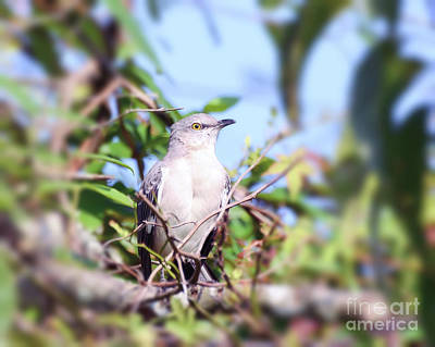 Photograph - Mockingbird Blessings by Kerri Farley