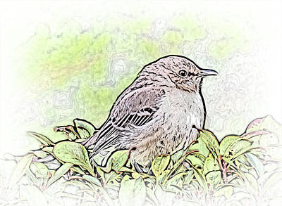 Photograph - Mockingbird Color Sketch by Leslie Montgomery