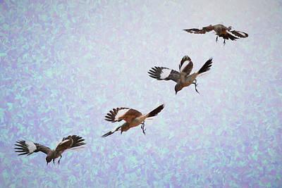 Mockingbird Digital Art - Mockingbird In Air Sequence Impression I by Linda Brody