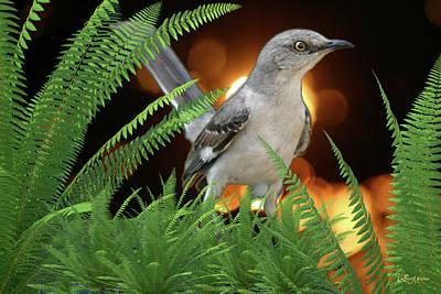 Photograph - Mockingbird In The Ferns by Ericamaxine Price