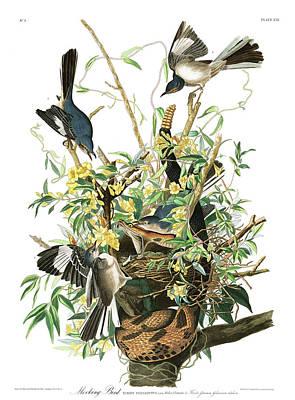Mockingbird Wall Art - Painting - Mockingbird by John James Audubon
