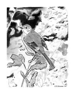 Mockingbird Drawing - Mockingbird On Branch by Jamie Jorgensen