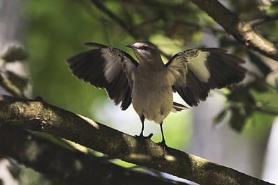 Mockingbird Photograph - Mockingbird  by Terry DeLuco