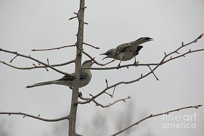 Photograph - Mockingbirds Talk It Out by Allen Nice-Webb