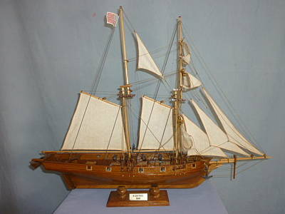 Model Of The Albatross Original