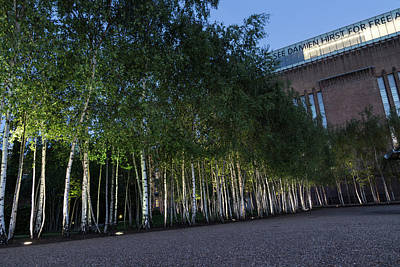 Photograph - Modern Birch Garden In Front Of Tate Modern Art Gallery London U K by Georgia Mizuleva