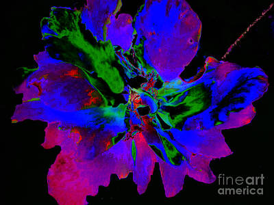 Photograph - Modern Floral Abstract Photograph by Merton Allen