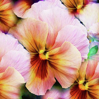Photograph - Modern Pansy Wall Art by Georgiana Romanovna