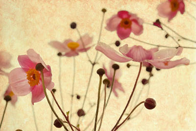 Stamen Mixed Media - Modern Vintage Blossoms by Georgiana Romanovna