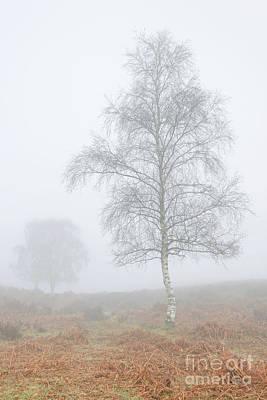 Mogshade Fog Art Print by Richard Thomas