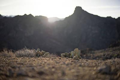 Photograph - Mohave Desert by Scott Rackers