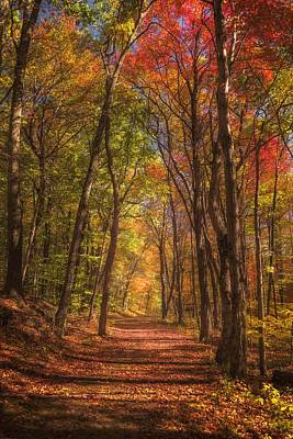 Photograph - Mohawk Forest Path by Kim Carpentier