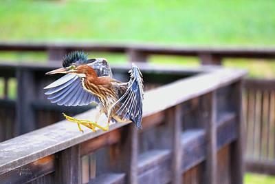 Photograph - Mohawk Landing by Tony Umana
