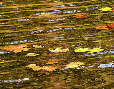 Photograph - Mohican River Leaves by Robert Clayton