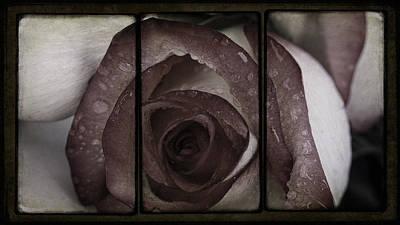 Zen Mixed Media - Moist Kiss Of A Rose by Georgiana Romanovna